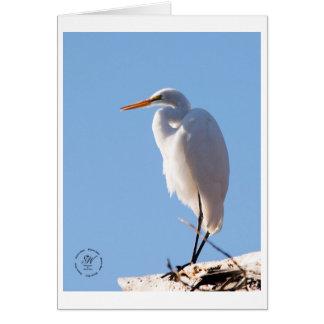 Snowy Egret, Atascadero Lake Park. Card