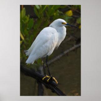 Snowy Egret Bird Poster