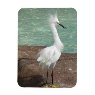 Snowy Egret Bird Flexible Magnets