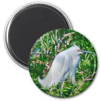 Snowy Egret in Breeding Finery Magnet