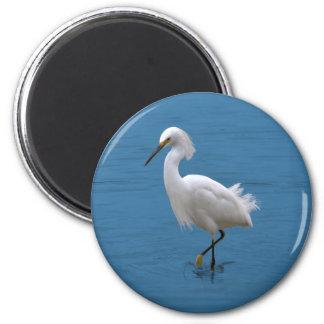 Snowy Egret in Water Magnet