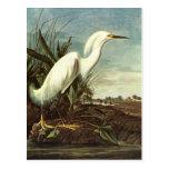 Snowy Egret, John James Audubon Post Cards