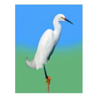 Snowy Egret on a Limb Postcard