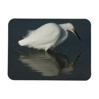 Snowy Egret Rectangular Magnet Vinyl Magnet