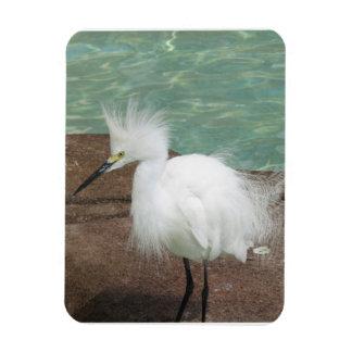 Snowy Egrets Flexible Magnet Rectangle Magnet
