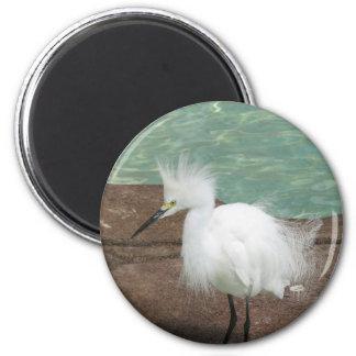 Snowy Egrets Magnet Magnet