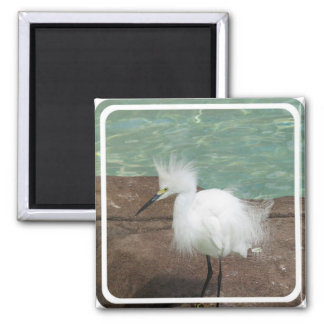 Snowy Egrets Magnet Fridge Magnets