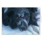Snowy Faced Border Collie Cute Dog Card