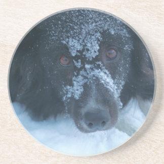 Snowy Faced Border Collie Dog Drink Coaster