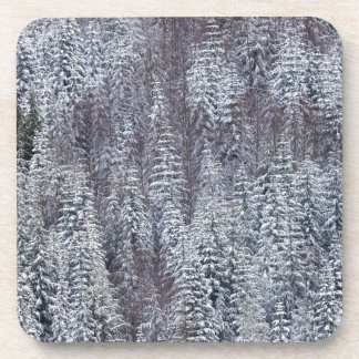 Snowy Forest, Mt. Rainier National Park Beverage Coasters