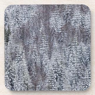 Snowy Forest, Mt. Rainier National Park Beverage Coasters