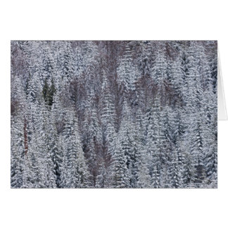Snowy Forest, Mt. Rainier National Park Greeting Card