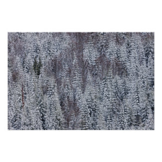 Snowy Forest, Mt. Rainier National Park Poster