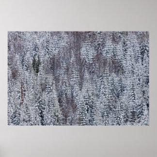 Snowy Forest, Mt. Rainier National Park Poster