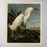 Snowy Heron or White Egret Poster