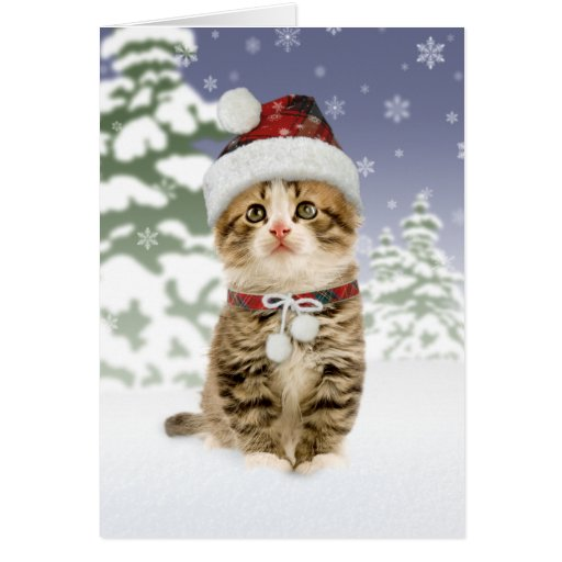 Snowy Kitten Christmas Cards