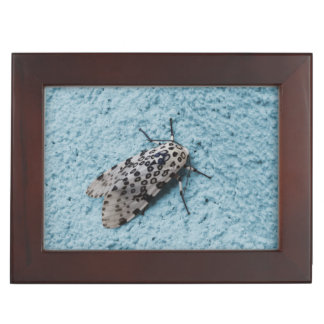 Snowy Leopard Moth Photo Keepsake Box