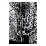 Snowy Maple Poster The MUSEUM Zazzle Gifts