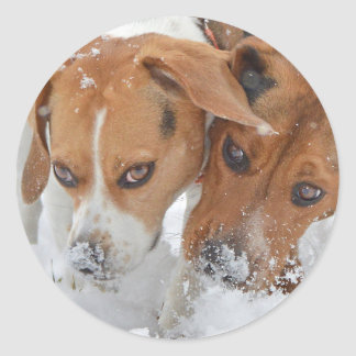 Snowy Noses Beagles Classic Round Sticker