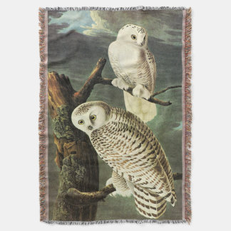 Snowy Owl - Audubon Fine Vintage Birds America