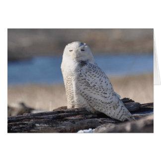 Snowy Owl Basking in the Sun Greeting Card