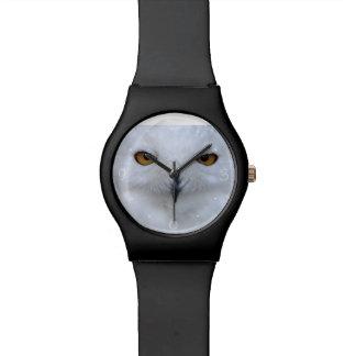 Snowy owl close up watch