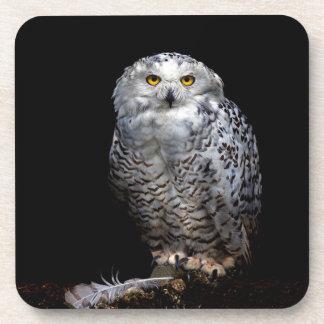 Snowy Owl Coaster