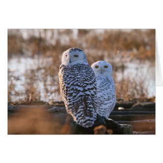 Snowy Owl Couple Card