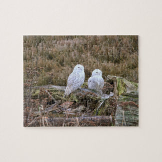 Snowy Owl Couple Jigsaw Puzzles