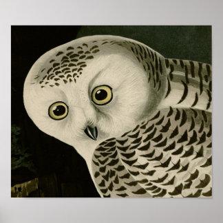 Snowy Owl (detail) Audubon Fine Birds America Poster