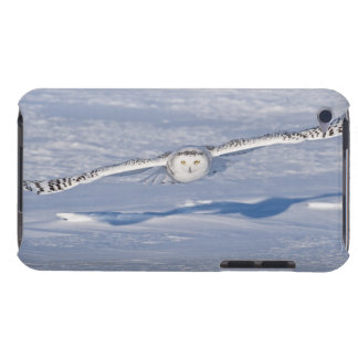 Snowy Owl in flight. 2 Barely There iPod Covers