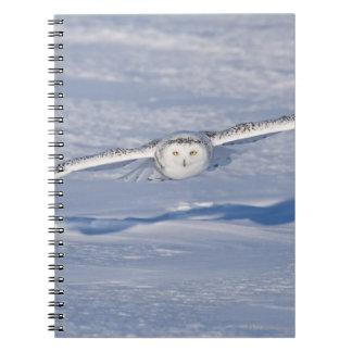 Snowy Owl in flight. 2 Notebook