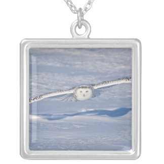 Snowy Owl in flight. 2 Silver Plated Necklace