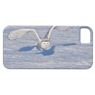 Snowy Owl in flight. Barely There iPhone 5 Case