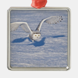 Snowy Owl in flight. Christmas Ornament