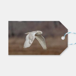 Snowy owl in flight gift tags