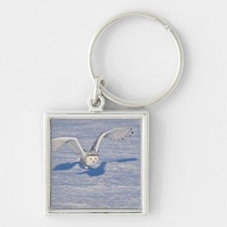 Snowy Owl in flight. Key Ring