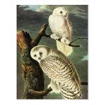 Snowy Owl, John James Audubon Post Card
