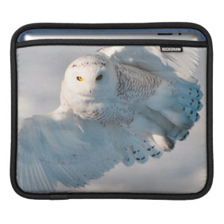 Snowy Owl landing on snow iPad Sleeve
