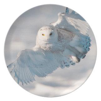 Snowy Owl landing on snow Plate