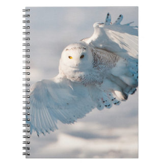 Snowy Owl landing on snow Spiral Note Book
