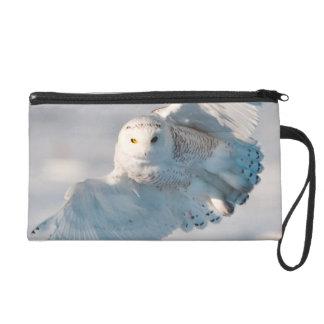 Snowy Owl landing on snow Wristlet