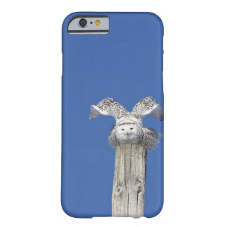 Snowy owl on top of a pole, preparing to take barely there iPhone 6 case