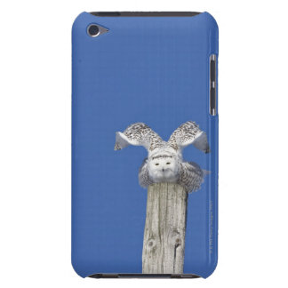 Snowy owl on top of a pole, preparing to take iPod touch Case-Mate case