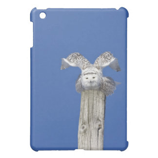 Snowy owl on top of a pole, preparing to take iPad mini cases