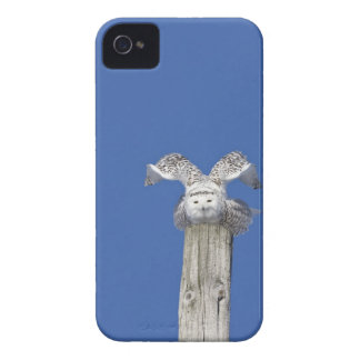 Snowy owl on top of a pole, preparing to take iPhone 4 cover