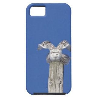 Snowy owl on top of a pole, preparing to take iPhone 5 case