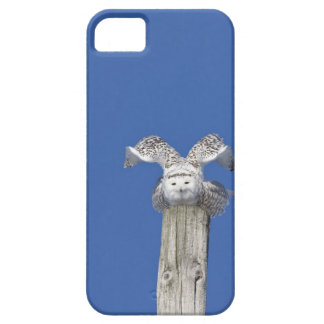 Snowy owl on top of a pole, preparing to take iPhone 5 covers