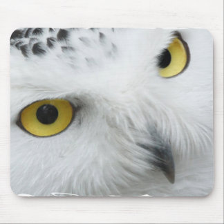 Snowy Owl Photo Mouse Pad