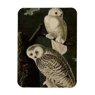 Snowy Owl Rectangular Magnet